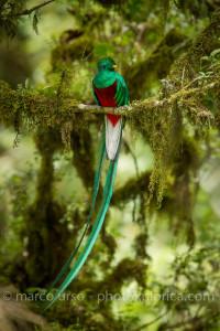 Costa Rica uccelli-54