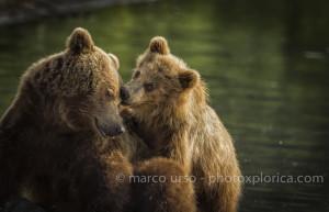 urso marco -16