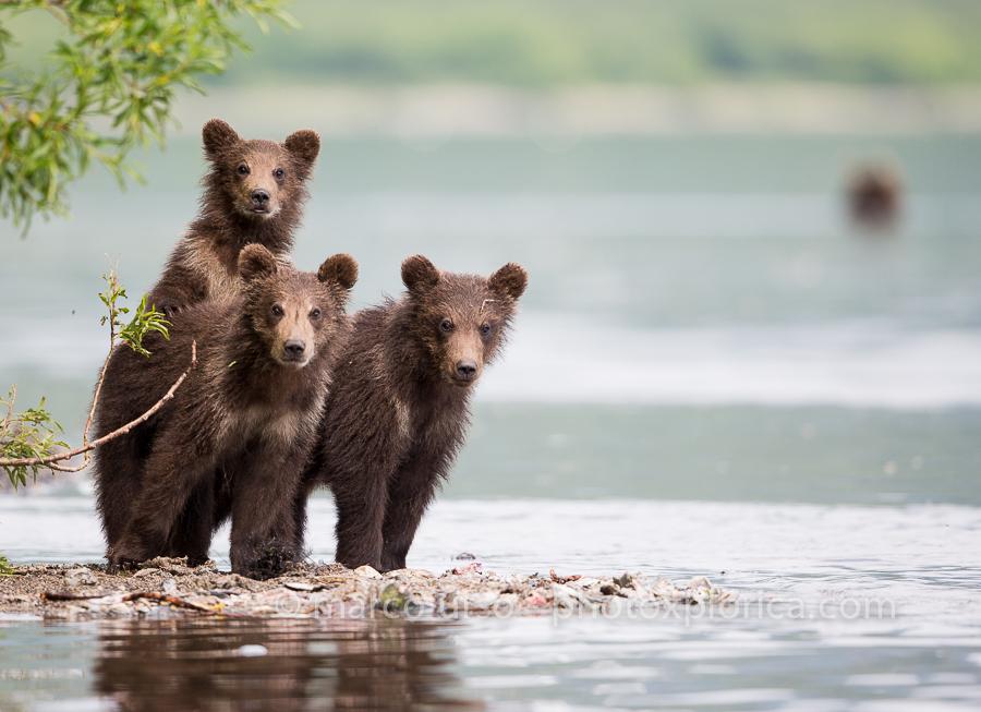 marco urso- Kamchatka Russia