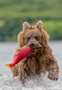 marco urso-2