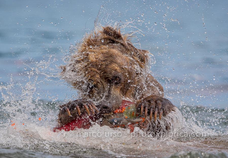 marco urso-4