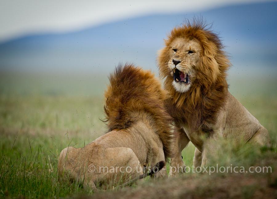 Marco Urso Masai Mara-1