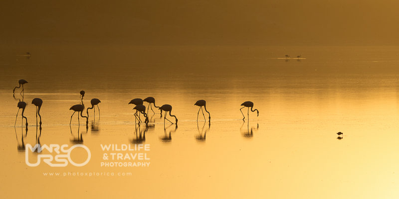 Lago Ndutu all'Alba - Tanzania - by Marco Urso photographer